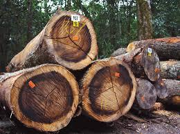 Aust b.wood